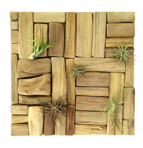 luchtplantjes wanddecoratie